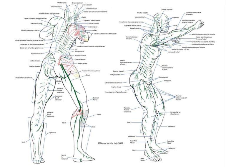 神経 麻痺 腋窩 寝違えの治し方!原因は腋窩神経圧迫によるもの?その真相は